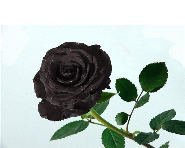 роза ветров Челябинск