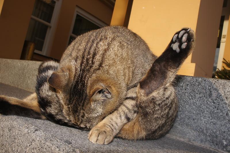 Когда коту делать нечего что он