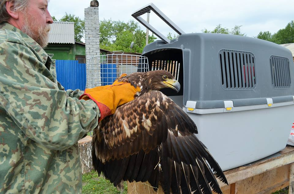 Дубровский выпустил орла