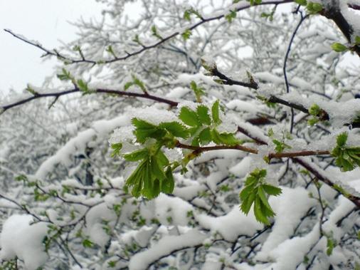 Вконце весеннего периода погода непустит граждан Кыштыма напикники