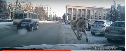 лошадь в Челябинске
