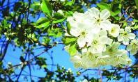 жара весна май